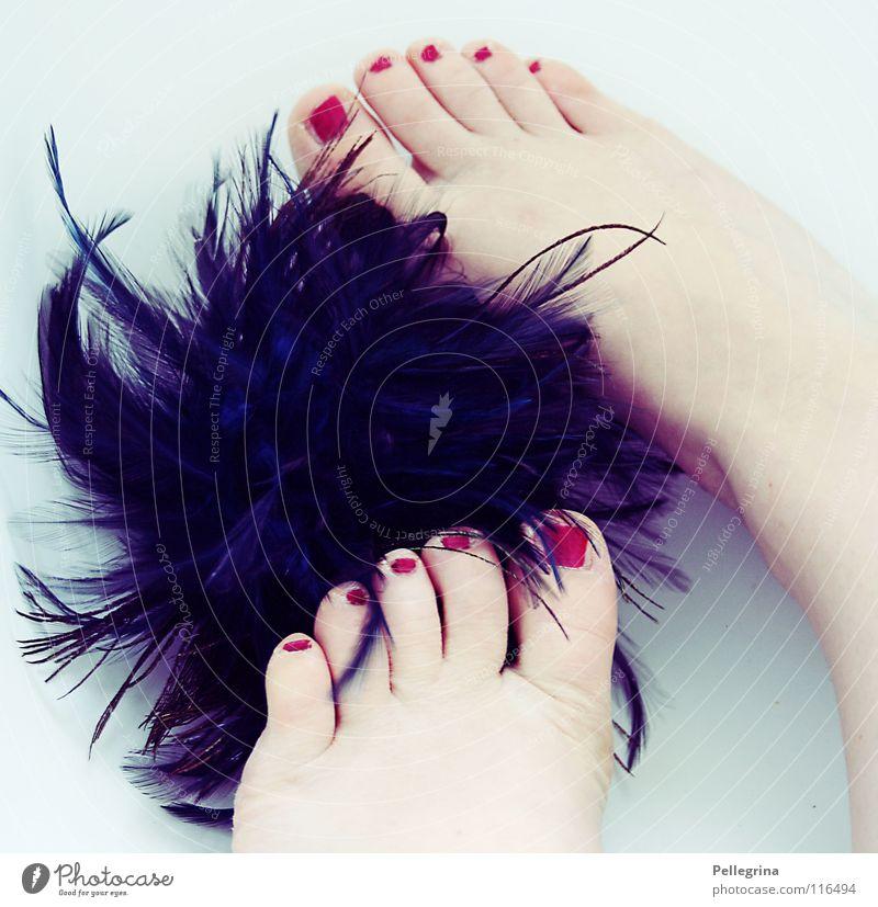 federvieh Frau blau kalt Fuß Vogel Feder weich Kosmetik leicht bleich sanft Zehen Nagel Nagellack Knäuel