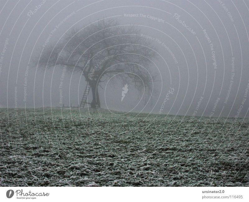 Der Baum 2 Feld Wiese Schnee Landschaft Natur Landwirtschaft Einsamkeit kalt Winter Monochrom Trauer Verzweiflung ursinator2.0 Traurigkeit