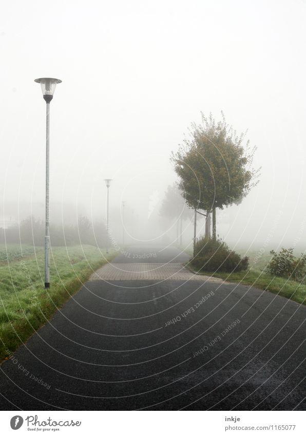 viele Wege führen nach Nehböll Umwelt Luft Frühling Herbst Klima Wetter Nebel Baum Dorf Stadtrand Menschenleer Straßenbeleuchtung Verkehr Verkehrswege
