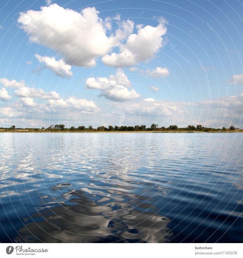 nach hause schwimmen Ferien & Urlaub & Reisen Tourismus Ausflug Abenteuer Ferne Freiheit Sommerurlaub Natur Landschaft Wasser Frühling Baum Wellen Seeufer