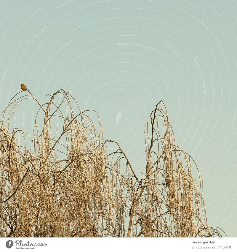 baumhoch Vogel Baum laublos Winter Herbst hocken hockend Raum ruhig Erholung Trauer Langeweile Pause gefährlich Birke beobachten dunkel Gemälde trist Ferne