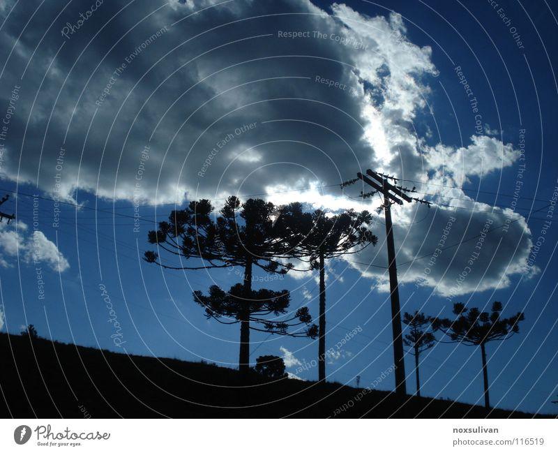 Cloud Eclipse Himmel Baum blau Sommer Blatt Wolken hell Denkmal Wahrzeichen