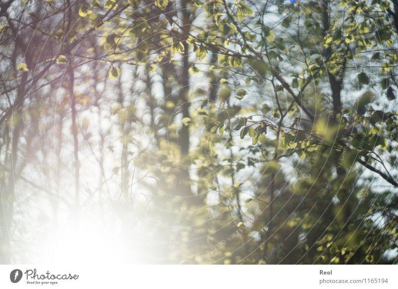 Sonnendurchflutet Umwelt Natur Sonnenlicht Frühling Sommer Schönes Wetter Pflanze Baum Sträucher Grünpflanze Wildpflanze Blatt Blattgrün Zweige u. Äste