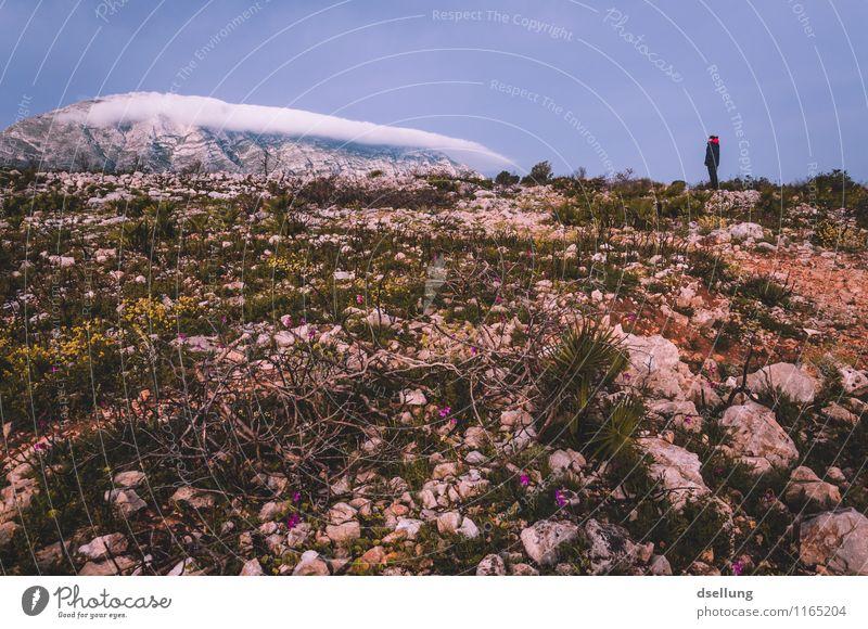 das Ziel vor Augen. wandern feminin Junge Frau Jugendliche 1 Mensch 18-30 Jahre Erwachsene Landschaft Pflanze Erde Himmel Wolken Frühling Schönes Wetter Blume