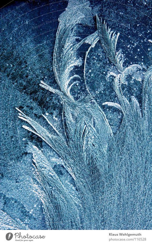 Filigran 1 schön Eisblumen zart Vergänglichkeit Eiskristall weiß Winter Fensterscheibe kalt edel filigran poetisch Makroaufnahme zerbrechlich Wunder blau Farbe