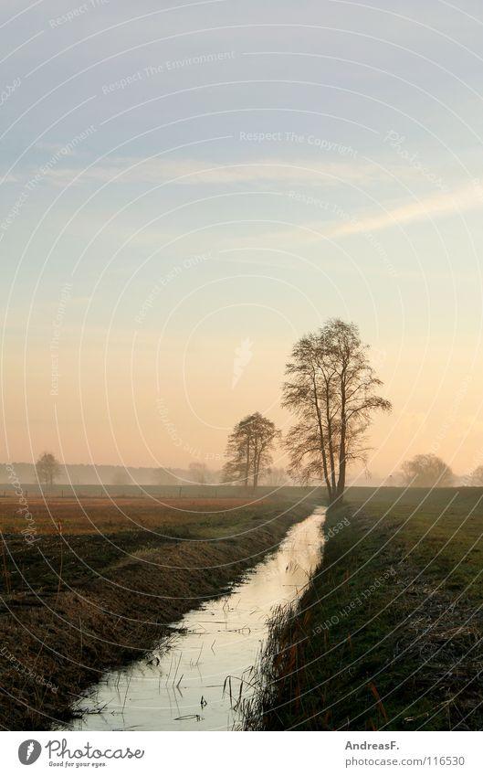 Morgengrauen Morgennebel Sonnenaufgang Bach kalt Herbst Oktober November Dezember Winter Nebel Nebelstimmung Baum Wiese Tau diagonal gefroren Landschaft