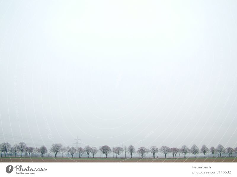 Winterallee_2 Schnee Himmel Horizont Nebel Eis Frost Baum Stadtrand Verkehrswege Straße Allee kalt trist Einsamkeit Niederrhein dunstig Landschaft Farbfoto