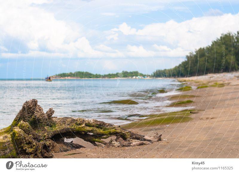 Getrocknete Baumwurzel am Strand Himmel Natur Ferien & Urlaub & Reisen blau Pflanze schön grün Farbe Sommer Wasser Erholung Meer Landschaft Wolken
