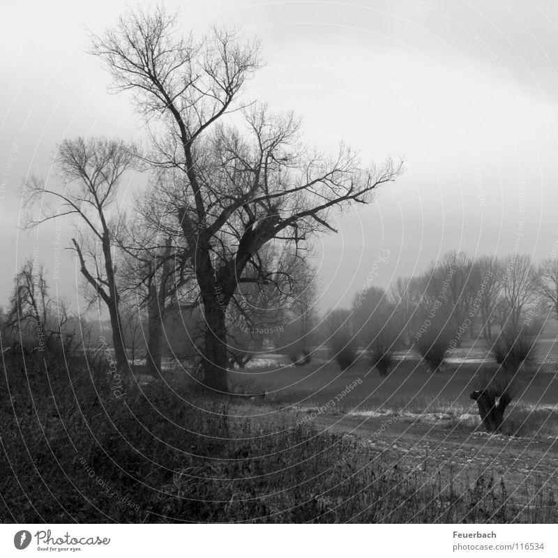 Rheinwinter Baum Winter Wolken Landschaft dunkel Wiese kalt Küste wandern Sträucher Frost Flussufer bizarr Düsseldorf Stadtrand Rhein