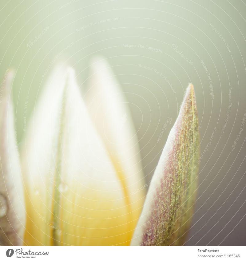 aus Natur Pflanze schön grün Farbe Blume Umwelt gelb Frühling Blüte Wiese natürlich grau Garten hell Park