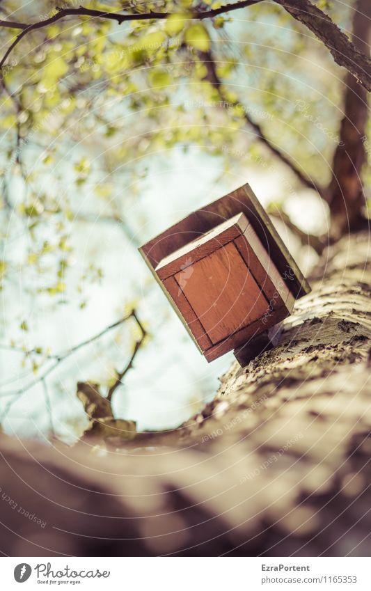 nicht vor Waschbären sicher! Umwelt Natur Pflanze Luft Himmel Frühling Sommer Klima Baum Blatt Garten Park Wald Haus Einfamilienhaus Bauwerk Gebäude Architektur