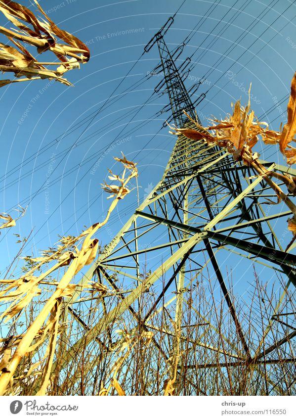 Frosch blickt auf Strommast Energiewirtschaft Feld Maisfeld Ernte Elektrizität Weitwinkel Holz grün Umweltverschmutzung Kohlekraftwerk Elektrisches Gerät