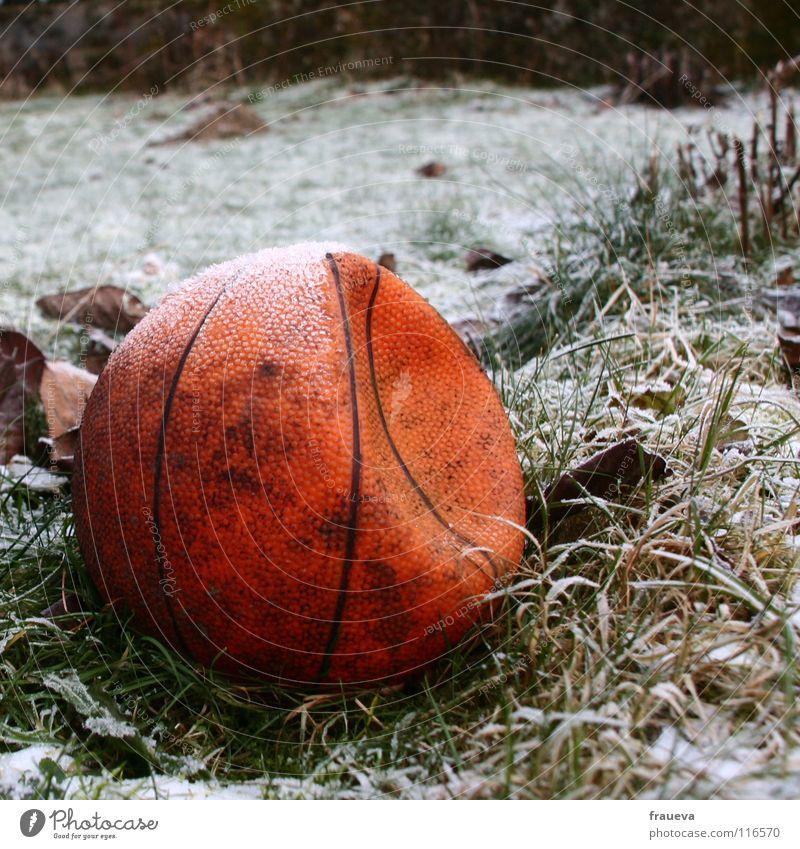 einsamer ball 2 Gras vergessen Einsamkeit Winter rund gefroren Blatt Raureif Eis kaputt Sport Spielen Ballsport Basketball Strukturen & Formen Kugel Linie