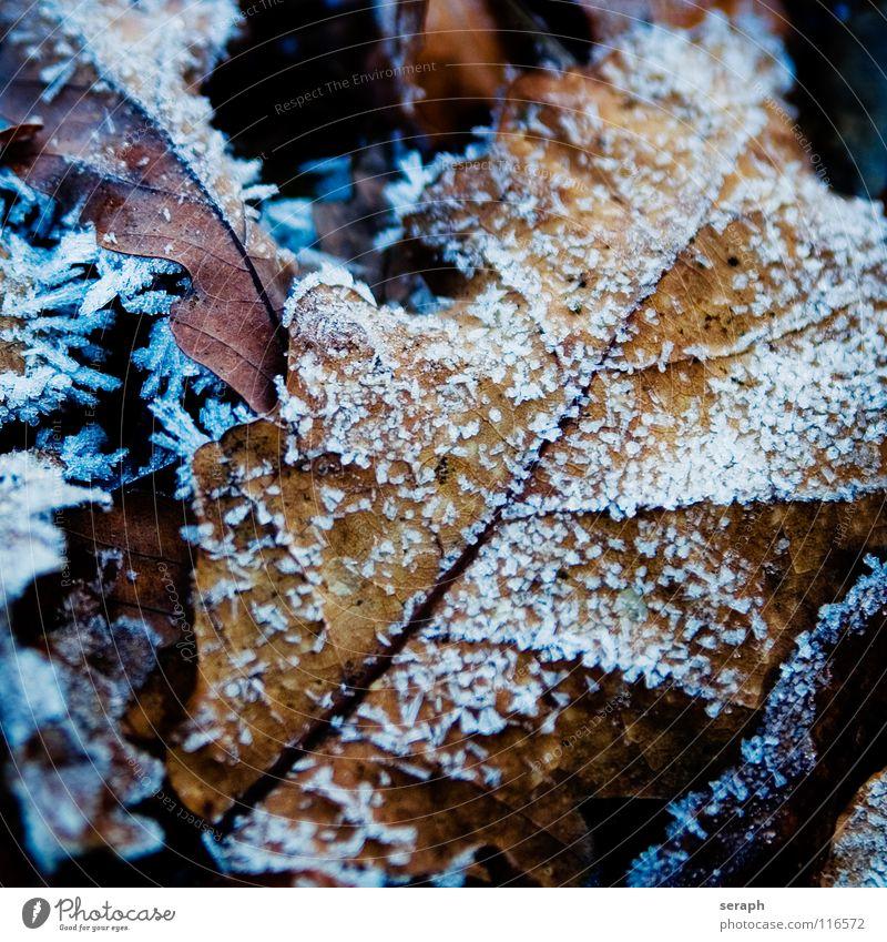 Eichenlaub Natur Pflanze Baum Blatt Winter Schnee Schneefall Eis Ast Frost Jahreszeiten Baumkrone reif Kristallstrukturen Kristalle Blattadern
