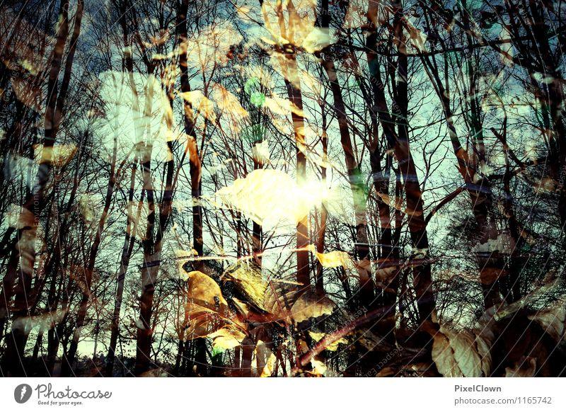 Wald Natur Ferien & Urlaub & Reisen blau Pflanze Baum Landschaft Blatt Tier gelb Gefühle natürlich Stil Holz außergewöhnlich braun