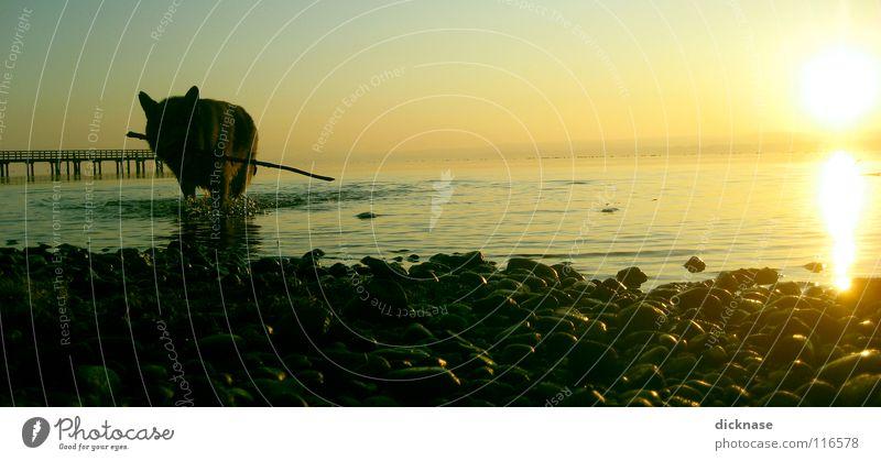 """""""Dicknase bringt STOCK...!™"""" Wasser Sonne Winter Hund See Horizont nass Spaziergang Seeufer Stock Haustier Dänemark Wasserspiegelung Haushund Gassi gehen"""