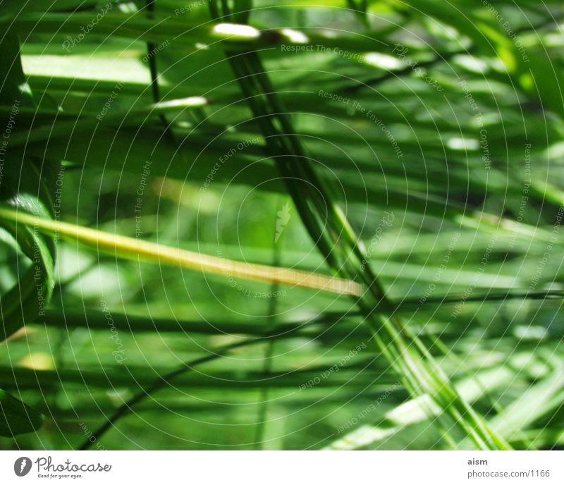 green Gras Wiese grün Halm Rasen