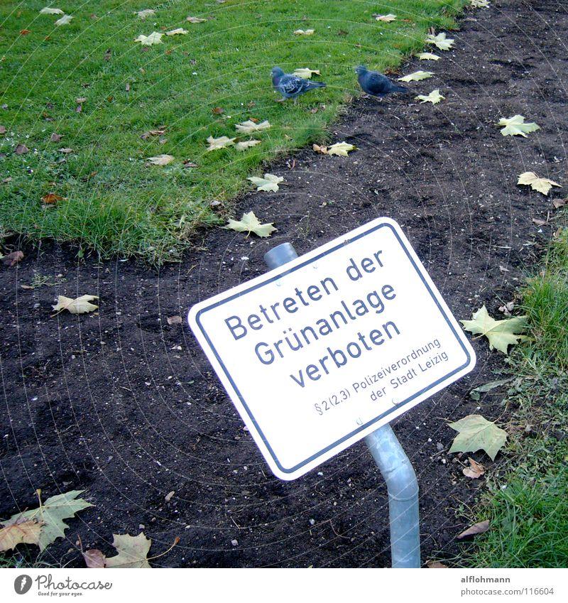 Kriminell Gras Park Schilder & Markierungen Rasen Verbote Taube Kriminalität