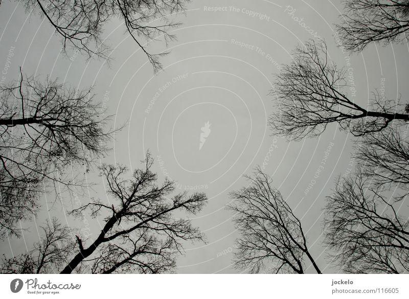 Taur Iaur Baum Winter Wald dunkel Angst trist Tanne Vergangenheit eng Flucht Märchen Nachrichten aus Mittelerde