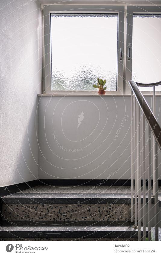 Kaktus ruhig Wohnung Innenarchitektur Dekoration & Verzierung Pflanze Grünpflanze Architektur hell weiß Einsamkeit einzigartig Fenster Fensterbrett Flur