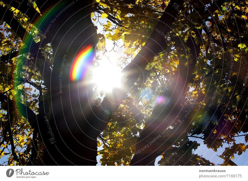 Herbstlicht Pflanze Sonne Baum ruhig Wärme hell leuchten Warmherzigkeit Schönes Wetter Baumkrone herbstlich Farbenspiel Prisma regenbogenfarben