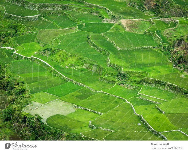 green pattern Umwelt Natur Landschaft Gras Reis Feld grün Ferien & Urlaub & Reisen Asien Luzon Philippinen Reisfeld Farbfoto Außenaufnahme Luftaufnahme