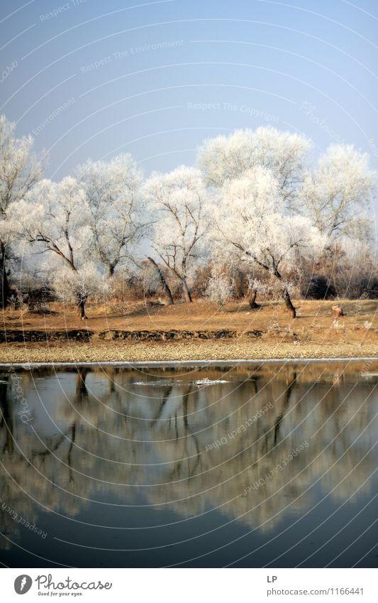 Mures 1 Umwelt Natur Landschaft Urelemente Erde Luft Wasser Himmel Wolkenloser Himmel Frühling Winter Schönes Wetter Eis Frost Schnee Baum Wald Küste Seeufer