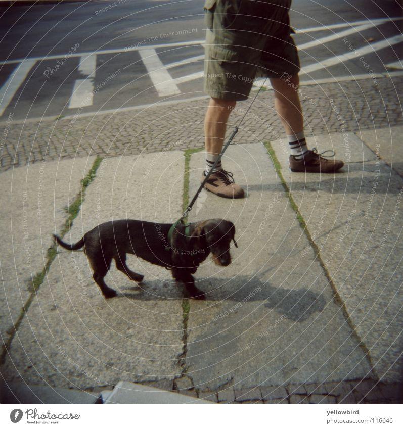 Der Hundmann. Mann Straße Hund Seil Spaziergang Verkehrswege Leipzig Säugetier Holga Sachsen Dackel Gassi gehen Hundeleine