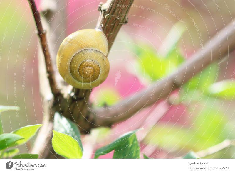 Frühlingsschnecke Natur schön grün Sommer ruhig Tier Umwelt gelb Glück Garten rosa Park Wildtier Sträucher warten