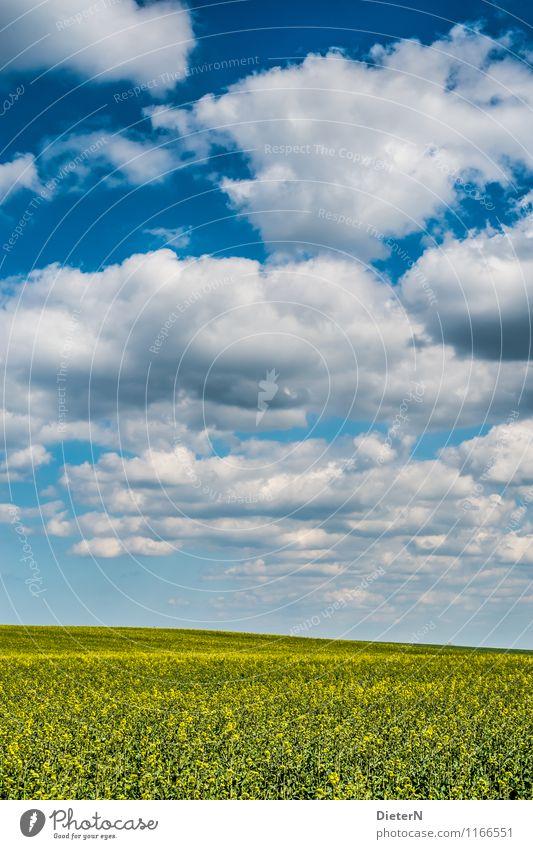 Formation Umwelt Landschaft Himmel Wolken Schönes Wetter Feld blau gelb weiß Mecklenburg-Vorpommern Raps Rapsfeld Farbfoto Außenaufnahme Menschenleer