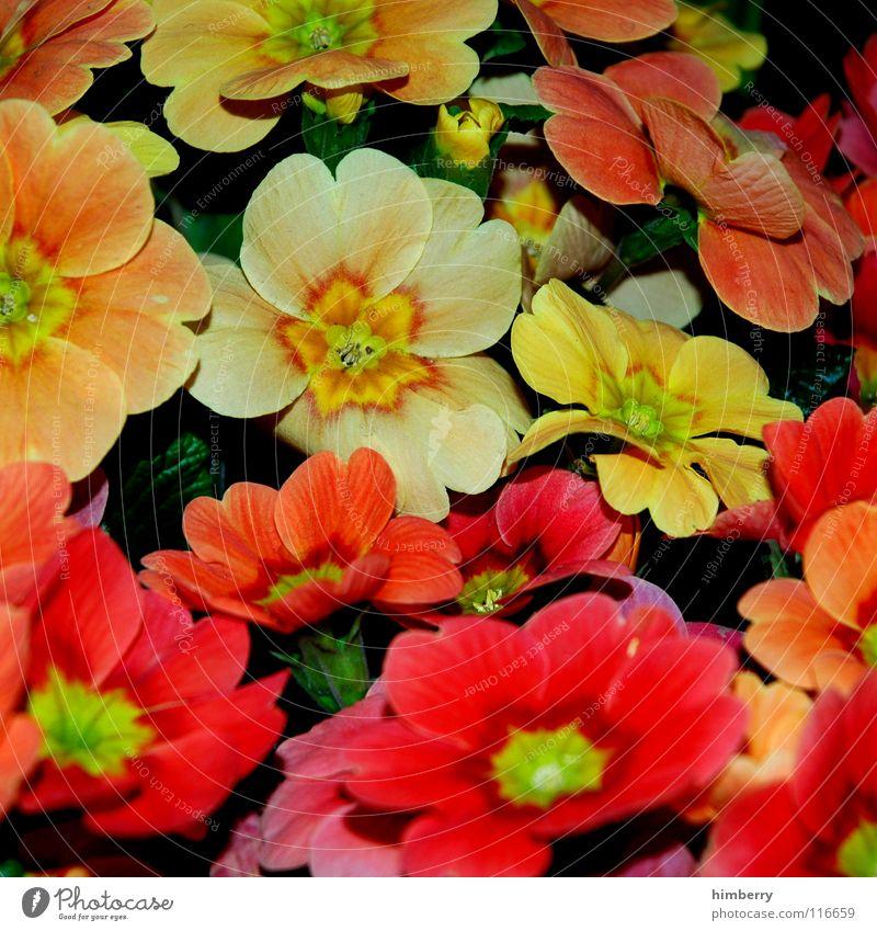 fullcolor Natur Pflanze schön Farbe Sommer Blume Freude Frühling Blüte Park Wachstum Erde Blütenknospen Beet gedeihen Blumenbeet