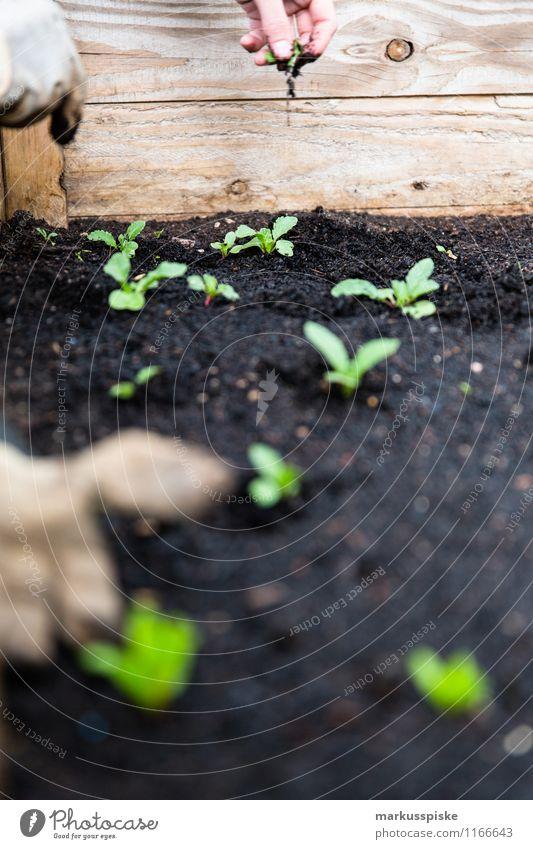 hochbeet urban gardening Stadt Pflanze Gesunde Ernährung Leben Garten Lebensmittel Freizeit & Hobby Wachstum Häusliches Leben Blühend Wohlgefühl Bioprodukte