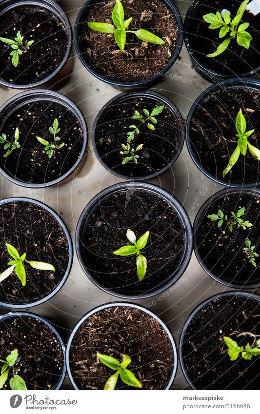 aufzucht urban gardening Freude Gesunde Ernährung Leben Glück Garten Lebensmittel Lifestyle Wohnung Freizeit & Hobby Häusliches Leben Kräuter & Gewürze Gemüse