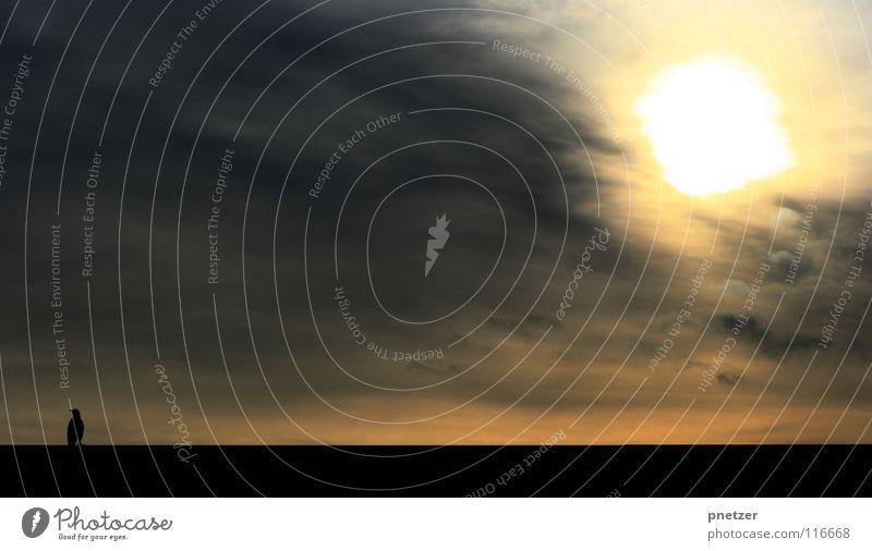 Krähe Vogel Wolken schwarz unheimlich Angst Panik Winter Himmel Sonne Silhouette Sonnenuntergang