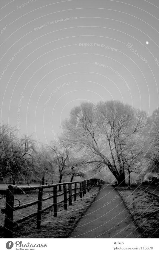 Kalter Weg Himmel Baum Winter kalt grau Wege & Pfade Frost Mond Zaun