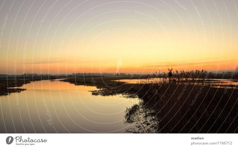 Abendland Landschaft Pflanze Wasser Himmel nur Himmel Wolkenloser Himmel Sonnenaufgang Sonnenuntergang Frühling Wetter Schönes Wetter Gras Wiese Küste Flussufer
