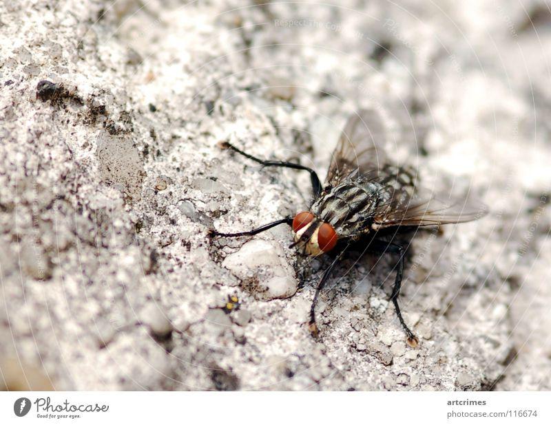 Redeye Beton Unschärfe Tiefenschärfe rot schwarz weiß grau Gefühle Momentaufnahme Insekt Macht Rüssel Makroaufnahme Facettenauge Nahaufnahme Fliege Flügel ruhig