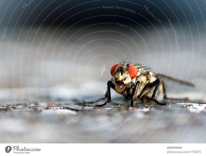 The Bubble-Fly Beton Unschärfe Tiefenschärfe rot schwarz weiß grau Gefühle Momentaufnahme Insekt Macht Rüssel Makroaufnahme Facettenauge Nahaufnahme Fliege