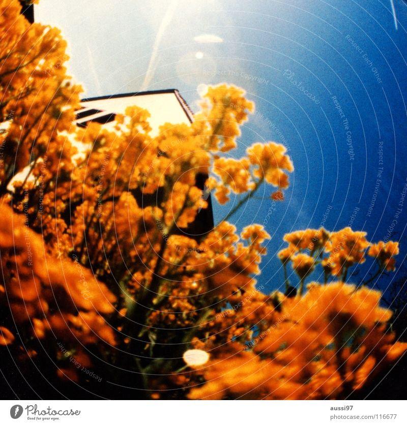 Sicht Blume Sommer rund Dach Linse Makroaufnahme grell Lichteinfall Kondensstreifen Runde Sache