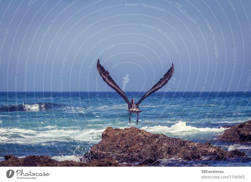 Take off - Pelikan Natur Sommer Sonne Meer Landschaft Tier Ferne Umwelt Küste Freiheit fliegen Vogel Lifestyle Wellen Wildtier frei