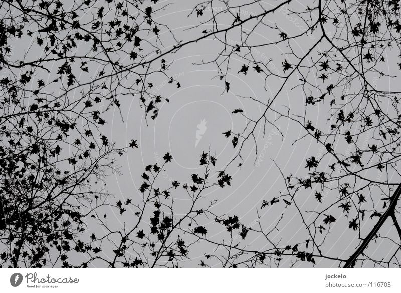 Sterntaler II Baum Winter Landschaft dunkel kalt Herbst Angst Nebel Ende Buche Laubbaum
