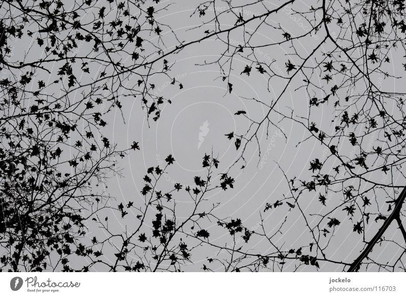 Sterntaler II Winter dunkel Nebel Herbst Laubbaum Buche Baum kalt jomam Landschaft Kontrast Ende Angst