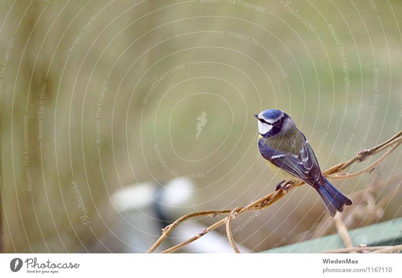 Vogelperspektive Natur blau grün Sommer Erholung Tier gelb Traurigkeit Frühling Herbst Garten braun träumen Kraft sitzen