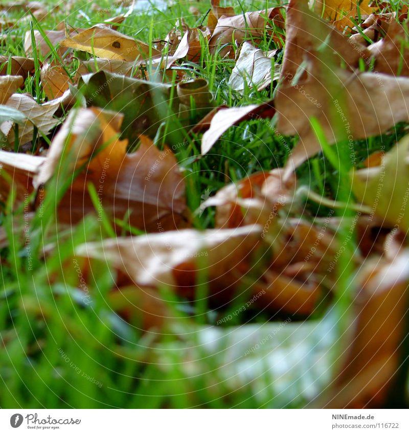 Herbstlaub Blatt grün braun rot bräunlich Park Wiese Gras Halm durcheinander mehrfarbig Mischung Oktober Froschperspektive Herbstbeginn dehydrieren welk