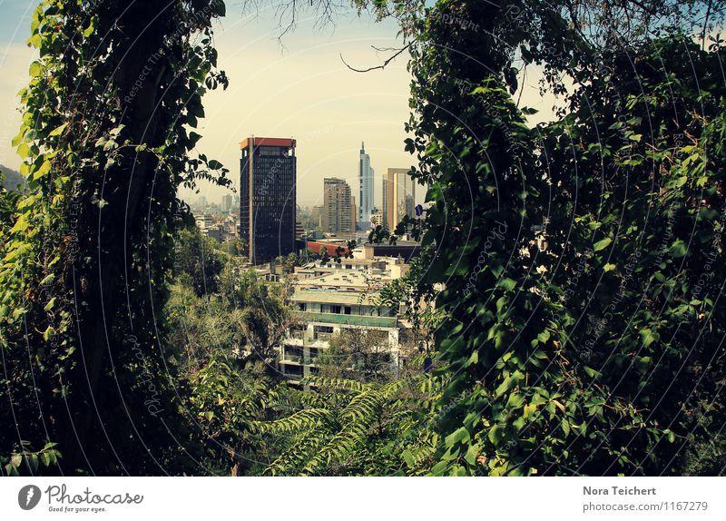 City-Jungle Umwelt Natur Pflanze Himmel Sommer Klima Schönes Wetter Baum Blatt Grünpflanze Wildpflanze Garten Park Wald Santiago de Chile Südamerika Hauptstadt