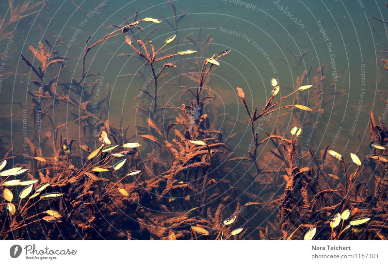 Wasserwelten. Umwelt Natur Pflanze Blume Blatt Grünpflanze Wildpflanze Garten Park Küste Flussufer Teich See ästhetisch braun Gefühle Surrealismus träumen Algen