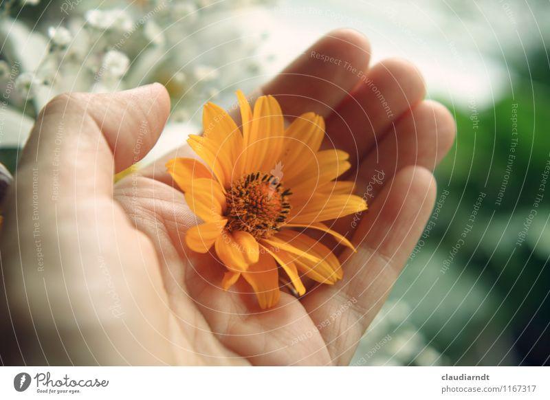 Fleur Mensch Pflanze schön grün Blume Hand gelb Liebe Blüte Glück orange Geburtstag Geschenk festhalten Blumenstrauß schenken