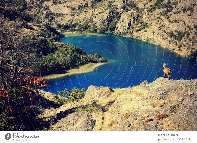 Heimat. Umwelt Natur Landschaft Pflanze Klima Wald Felsen Berge u. Gebirge Seeufer Bucht Meer Fluss Tier Wildtier Reh Hirsche 1 frei Unendlichkeit blau braun