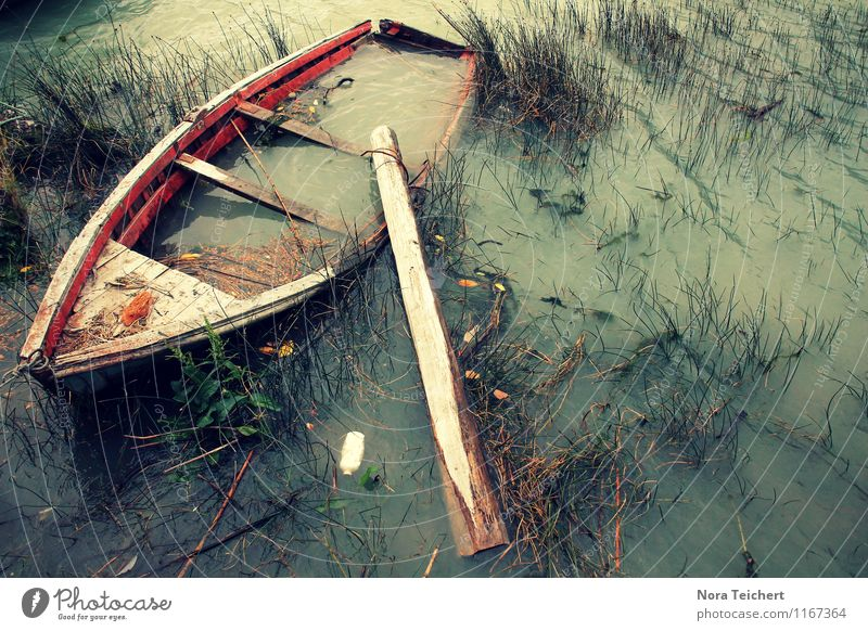 Das wird nimmer. Natur Pflanze Wasser Meer rot Landschaft Umwelt Traurigkeit Senior Herbst Gras Küste See rosa Freizeit & Hobby Sträucher