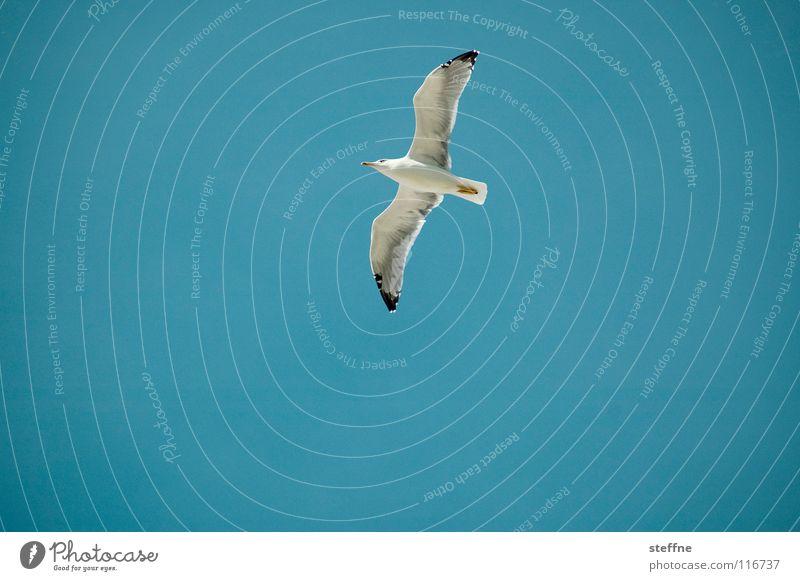 Möwe I: Die Erkundung Himmel weiß Meer blau Sommer schwarz Einsamkeit Luft Vogel Küste Luftverkehr gefährlich Feder Flügel entdecken Flugzeuglandung